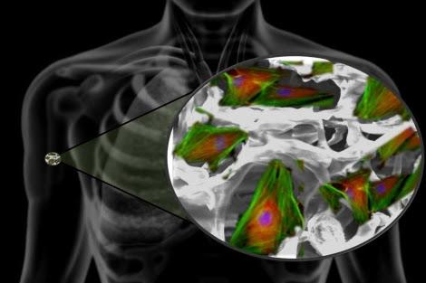La nanotecnología ayudará a crear medios extracelulares artificiales para regenerar tejidos dañados. | S. Contera/S. Trigueros/ U. de Oxford