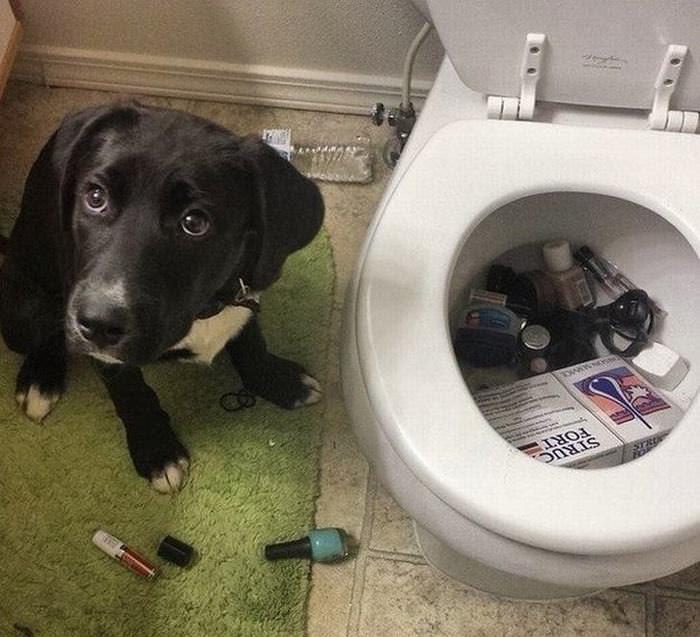 cachorros engraçados