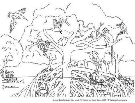 friends  mangrove mangroves colouring sheet