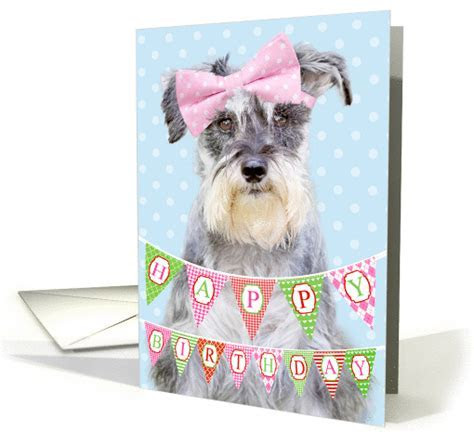 Birthday Card   Miniature Schnauzer Wearing Pink Polka Dot