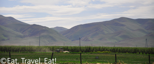 Driving on Interstate 5- Farming and the Hillside