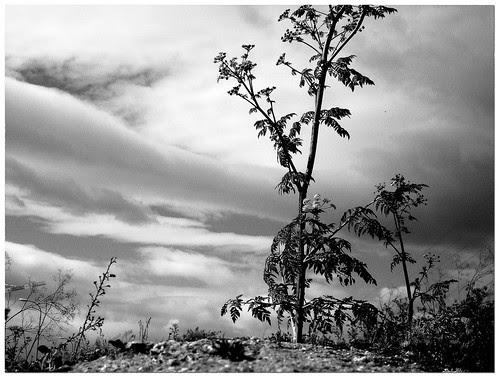 las afueras: plantas silvestres