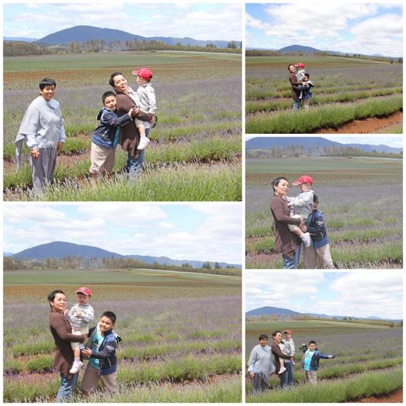 1-Tas lavender6