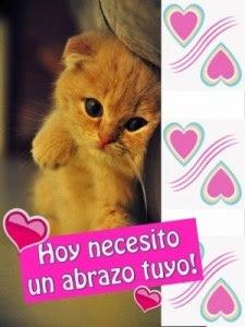 Imagen De Amor De Un Gatito Tierno Con Frase De Un Carino Especial