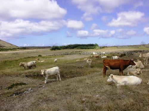 2008.08.11 vacas 005