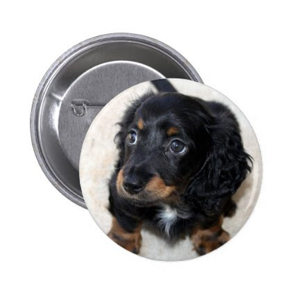 Dachshund puppy dog cute beautiful photo, gift buttons