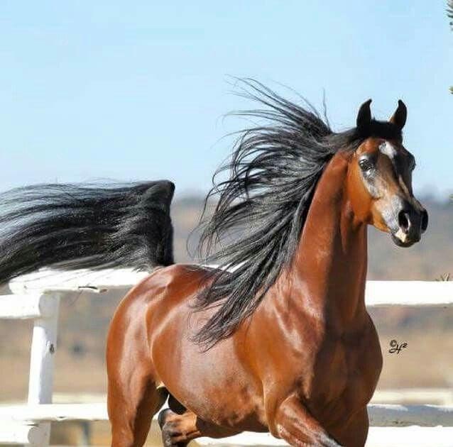 Pferderassen Bilder Mit Namen