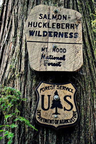 Salmon-Huckleberry Wilderness sign nailed to a Cedar in the Hunchback Mountain - Mt. Hood National Forest