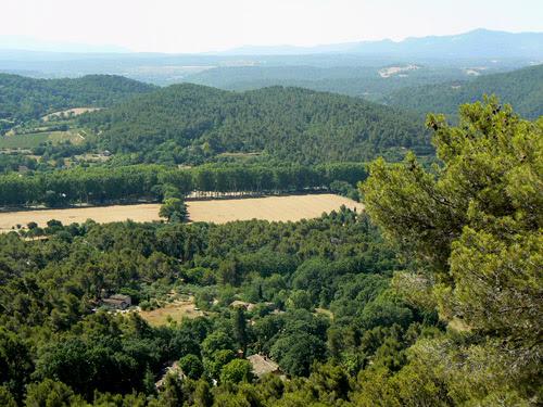 vue sur la forêt.jpg