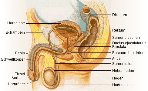 sperma beschriftungen