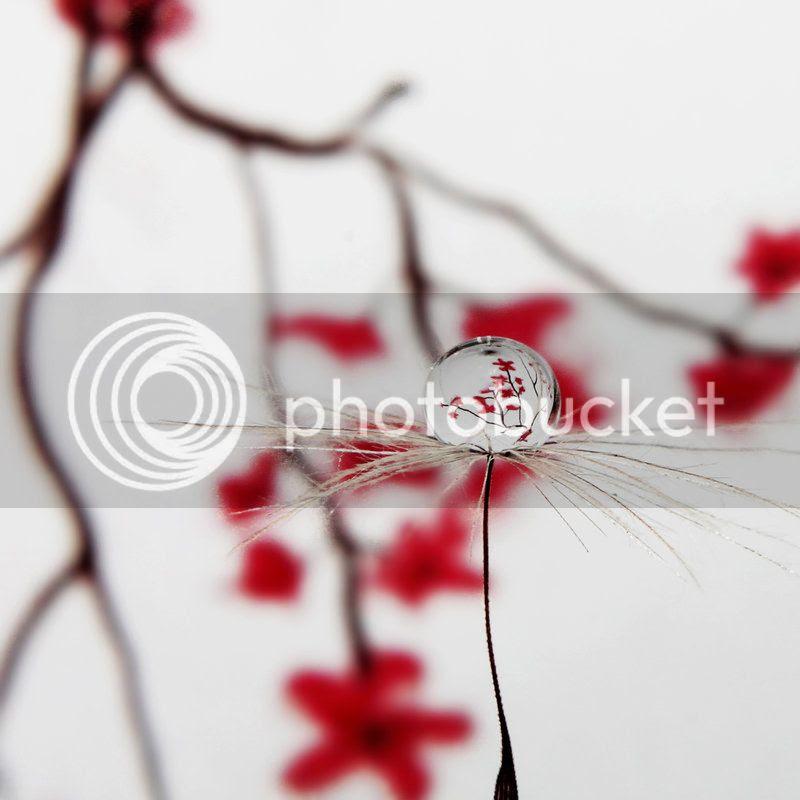 photo blossom_by_kara_a-d5le1he.jpg