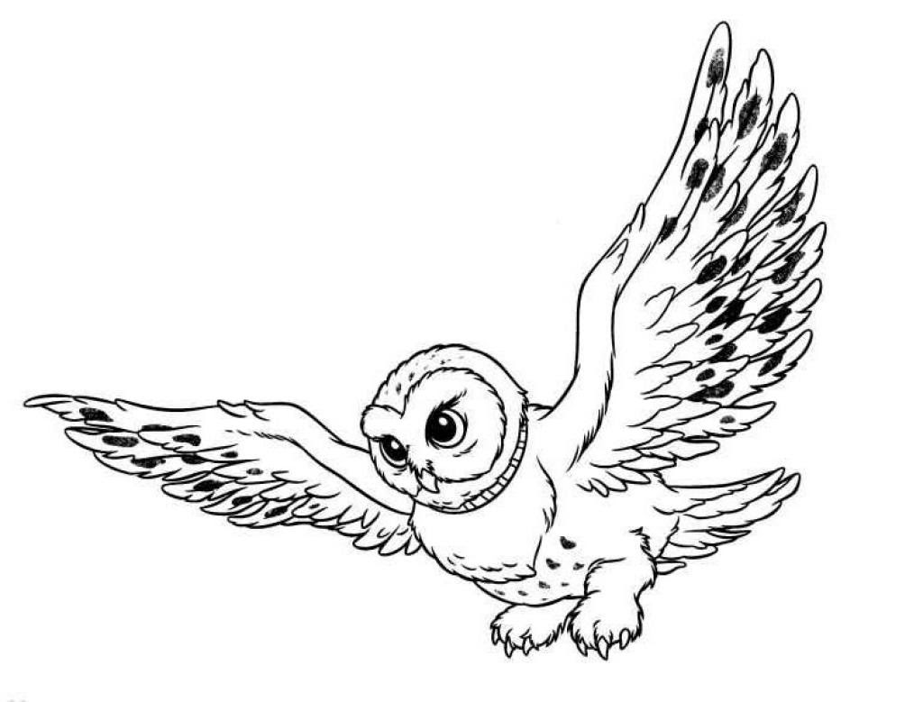 Owl Coloring Pages - Coloringpages1001.com