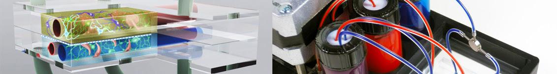 Tissue Chip for Drug Screening