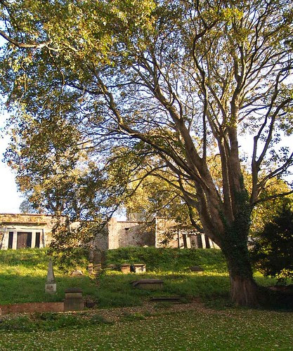 Catacombs and Mature Sycamore Tree at St Bartholomew's Cemetery in Exeter
