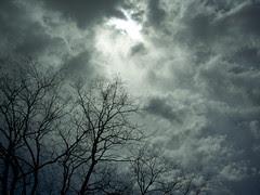 Dark day by dappled_dawg