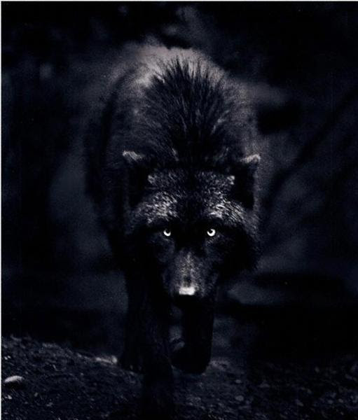 What Color Wolf Are You? - ProProfs Quiz