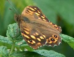 papillon, aout 2005