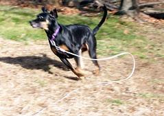 Lola_112209_run