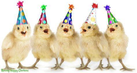 Raising Happy Chickens