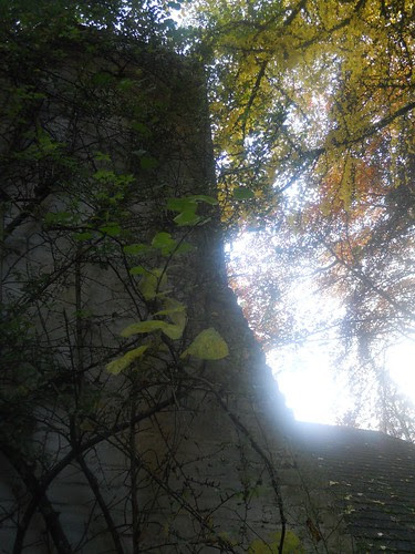 fall2010 274