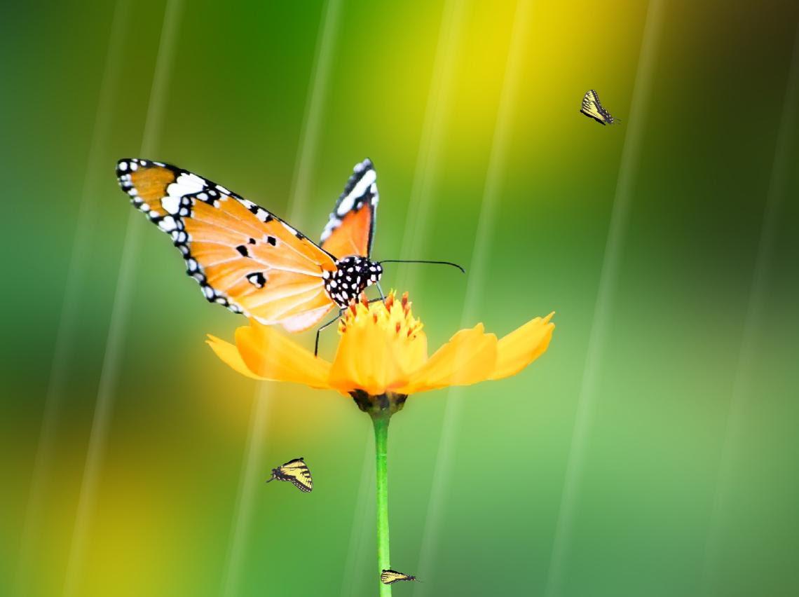 Animated Butterfly Wallpaper - WallpaperSafari