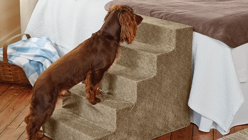 You Can Now Buy Steps To Help Your Pet Onto The Bed