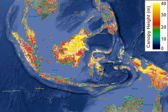Now On Google Earth Nasa Updates Global Forest Height Map