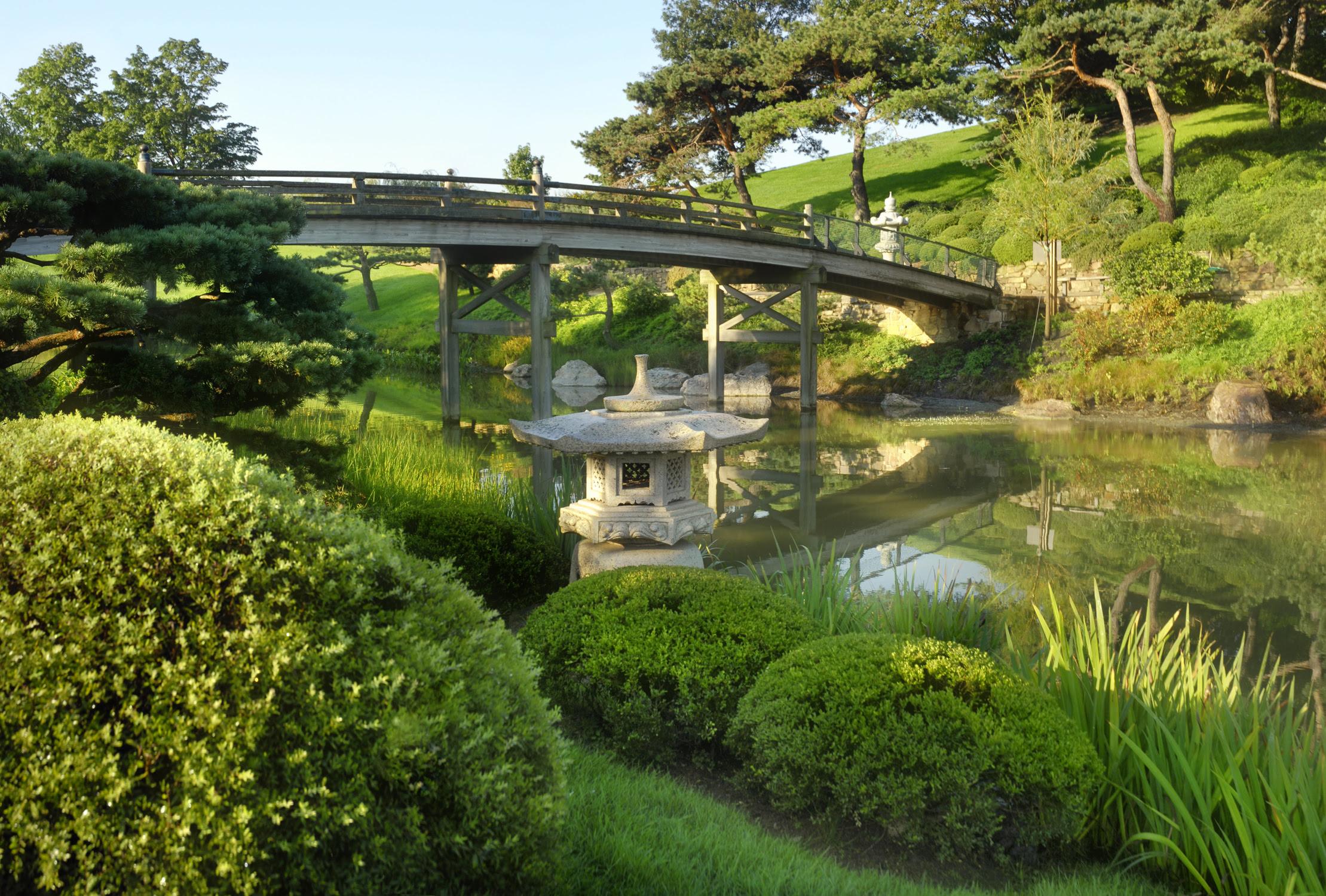 Redosier Dogwood The Morton Arboretum