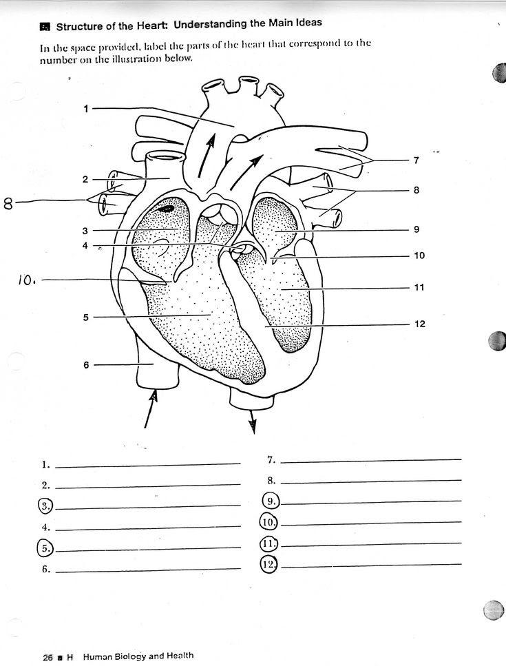 Blank Diagram Of The Heart Calendar June
