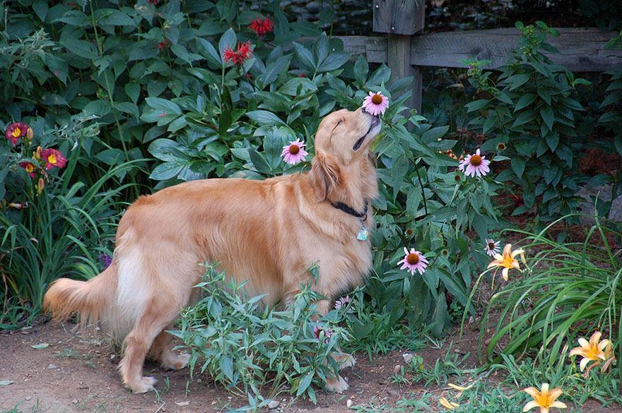 Molly pausa por um momento para cheirar uma flor