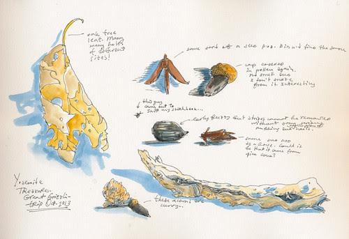 Oct 2013: Yosemite Trip - Treasures
