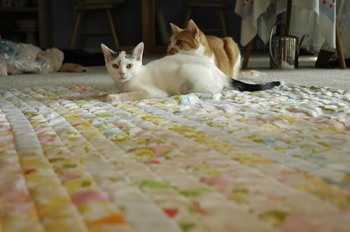 Cats on a Quilt