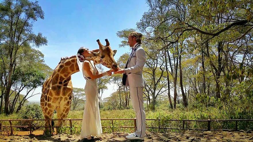boda-multiple-viaje-mundo-cheetah-rhian (7)