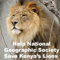 Save the Lions