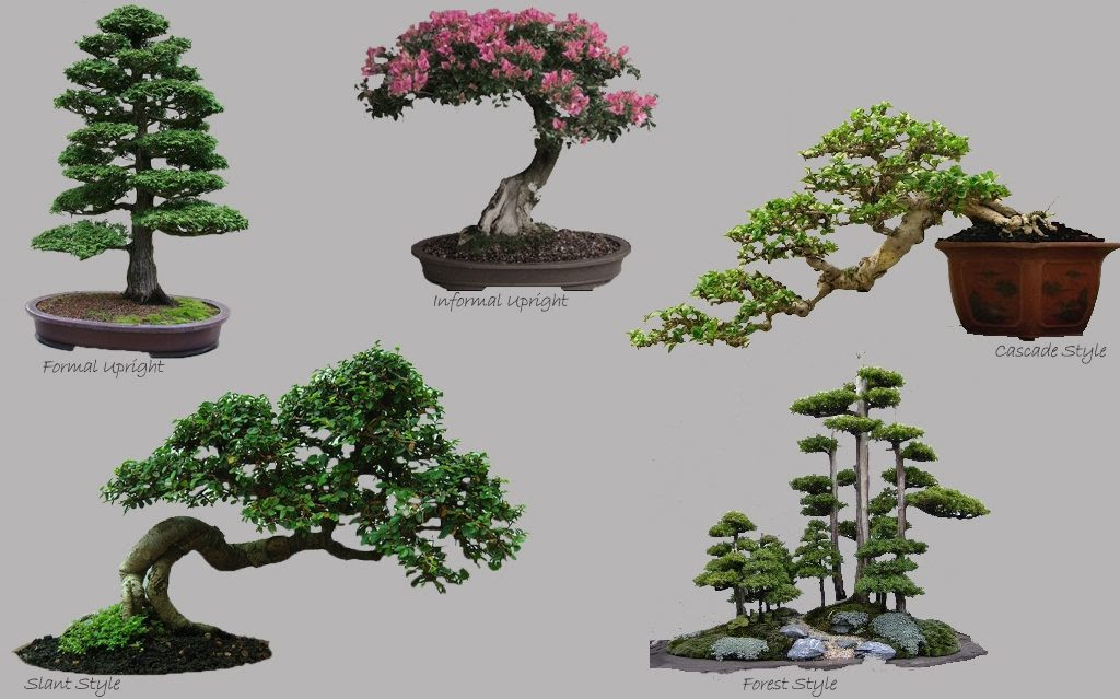 How To Plant Your First Bonsai Etechpath