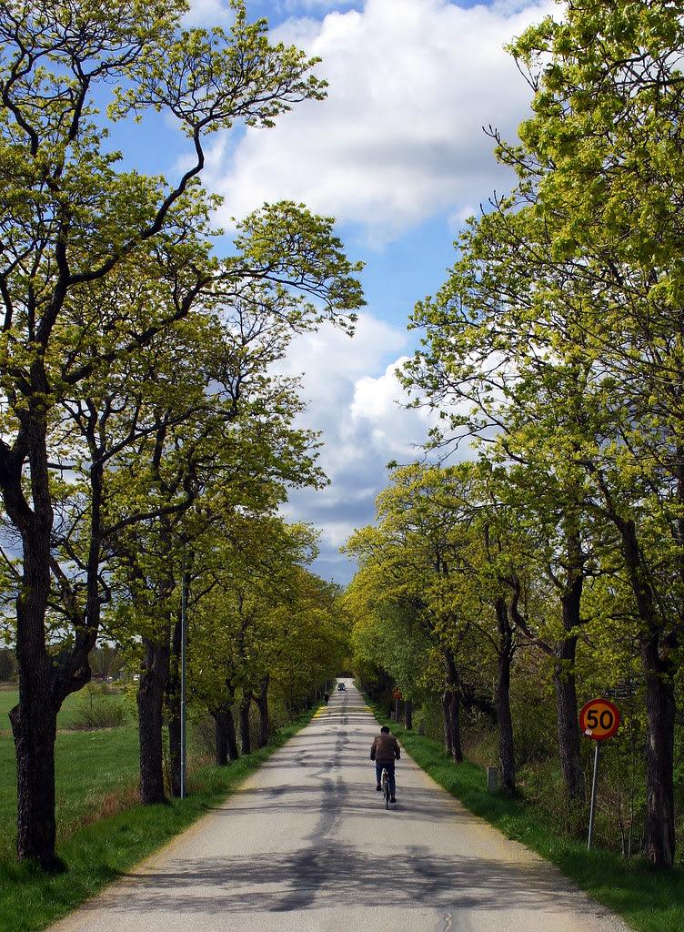 Down the avenue