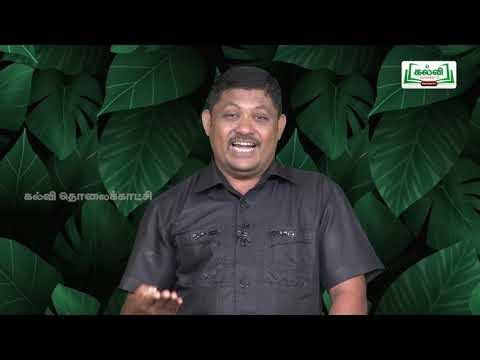 முப்பரிமாணம் Std 12 TM Bio Botany தாவர திசு வளர்ப்பு Part 04 Kalvi TV