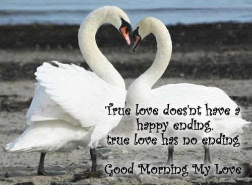 Good Morning My Love Image Quote Pictures Photos And Images For