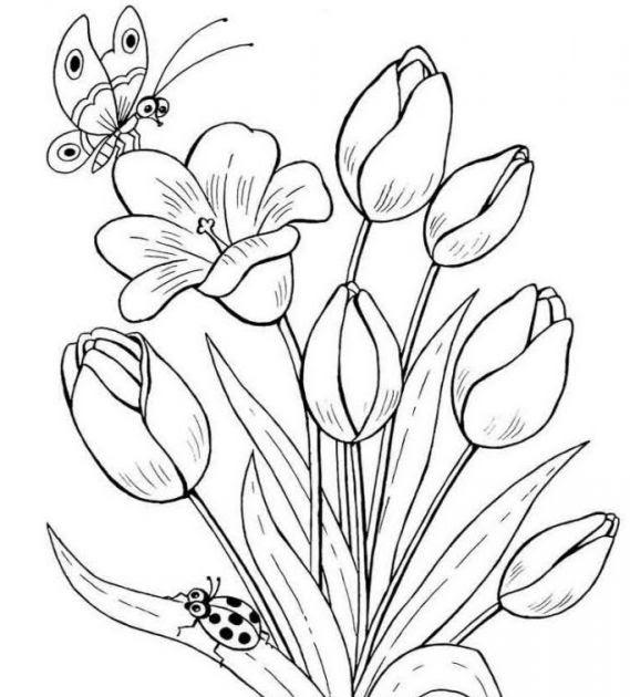 kumpulan mewarnai gambar sketsa bunga tulip yang mudah