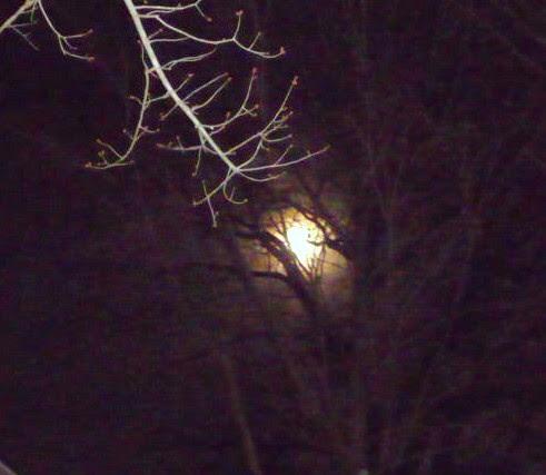 Moon Over Baltimore HomeRome 410-530-2400