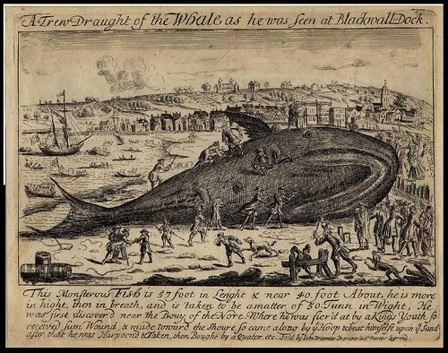 A Trew Draught of the Whale as he was seen at Blackwall-Dock 1690