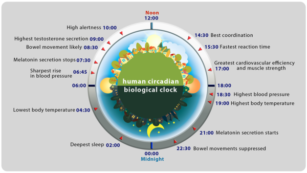 human circadian biological clock1