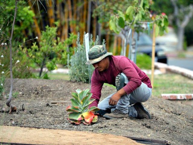 Landscape worker