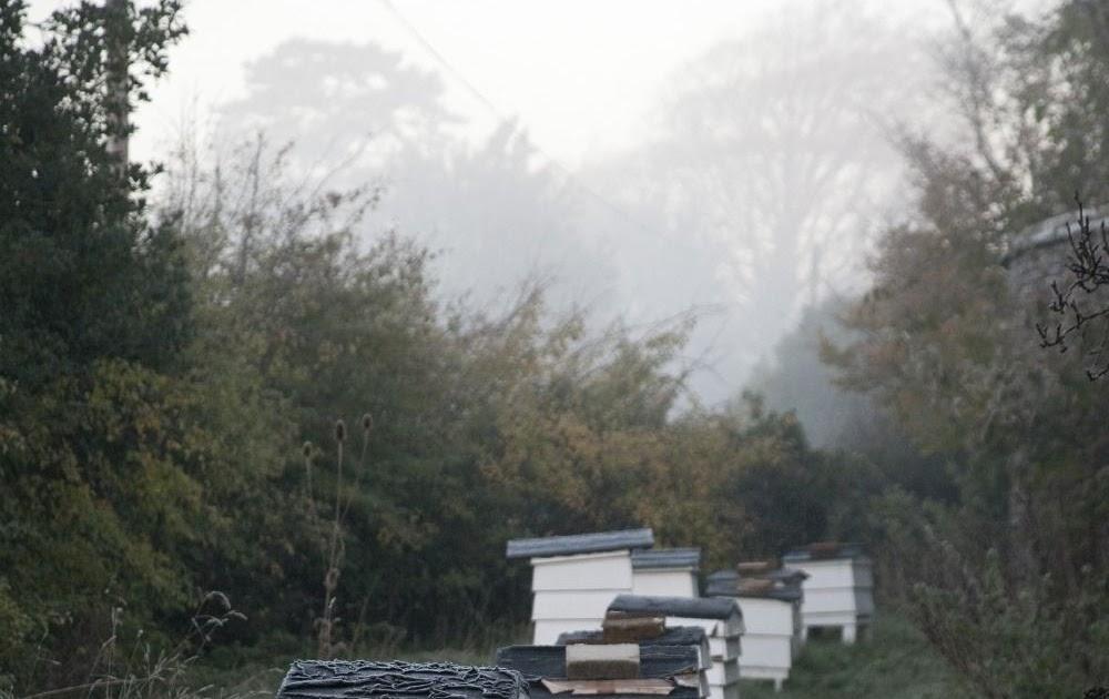 Ann Arbor Backyard Beekeepers - BACKYARD HOME