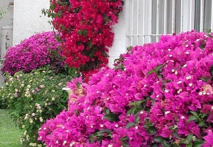 Jardineria y plantas la santa rita for Jardineria y plantas