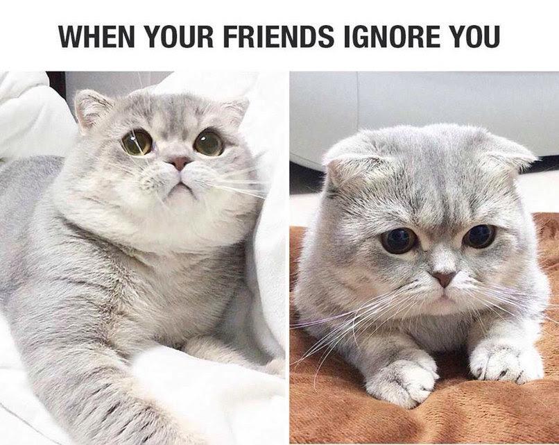 Oh Meme By Diamondstrader84 Memedroid
