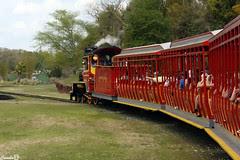 Safari pelo tremzinho
