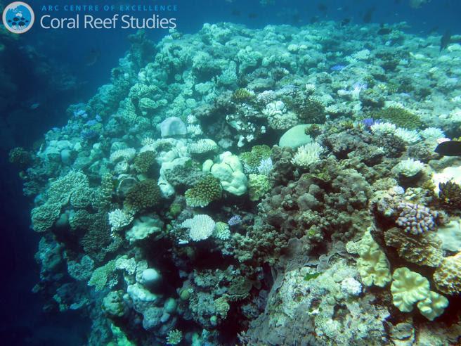 Corales parcialmente afectados por el blanqueamiento en la Gran Barrera