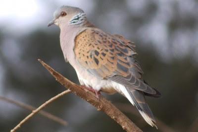 Caça: Governo permite abate de espécies em vias de extinção