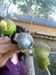 Birds_9510i